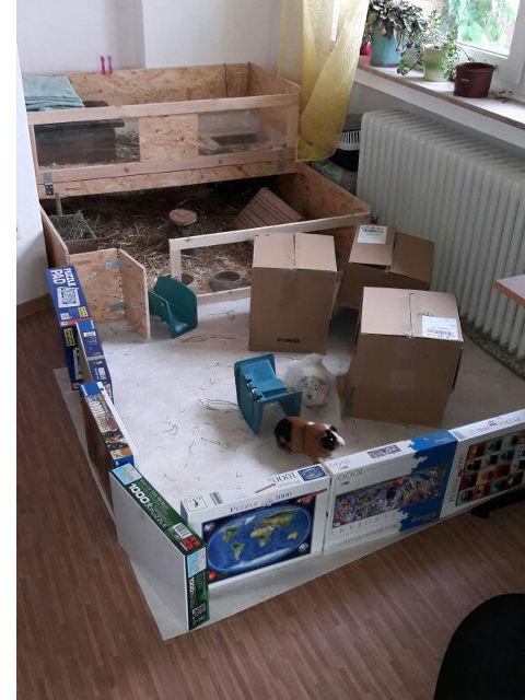 unsere meerschweinchen. Black Bedroom Furniture Sets. Home Design Ideas